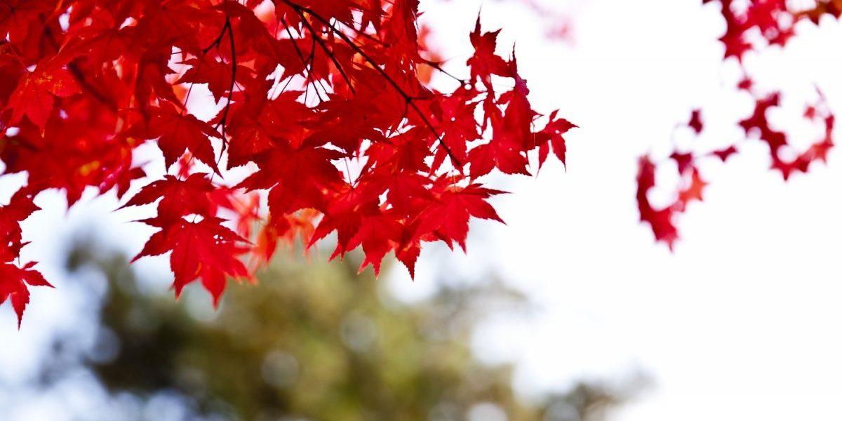 춘천 가을 단풍